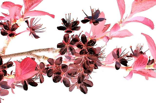 Blossom pixabay flowering-twig-380614_640